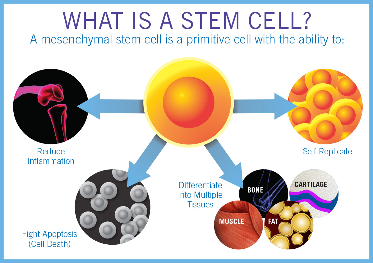 drawbacks of stem cell therapy